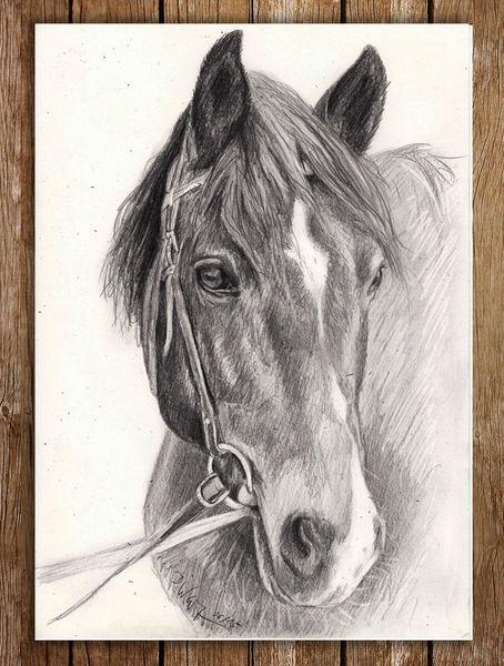 Portrait, Bleistiftzeichnung, Pferde, Kopf, Zeichnung, Zeichnungen