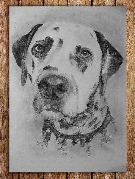 Tiere, Dalmatiner, Hund, Zeichnungen, Zeichnung