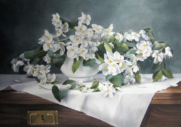 Blumen, Stillleben, Jasminum, Aquarell