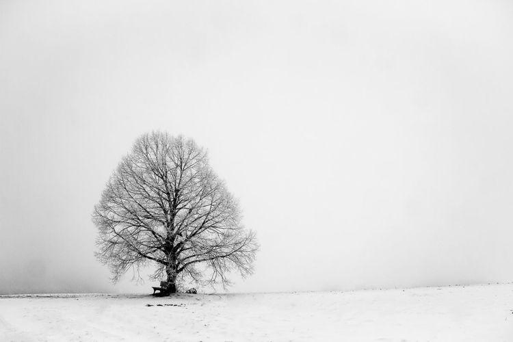 Nebel, Winter, Ruhe, Baum, Frieden, Schnee