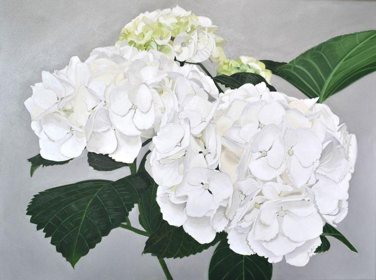 Blumen, Hortensie weiß, Blüte, Fotorealismus, Ölmalerei, Malerei