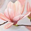 Ölmalerei, Magnolien, Aprikose, Blumen