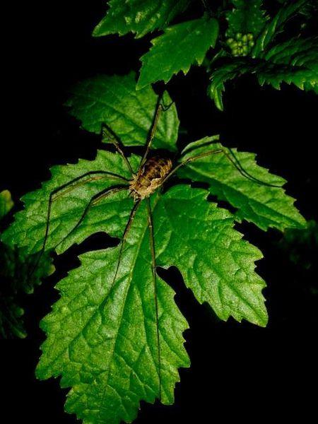 Natur, Blätter, Spinne, Fotografie