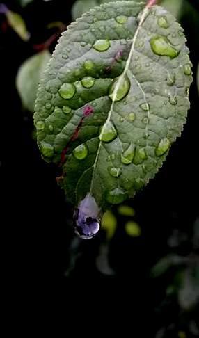 Blätter, Natur, Fotografie,