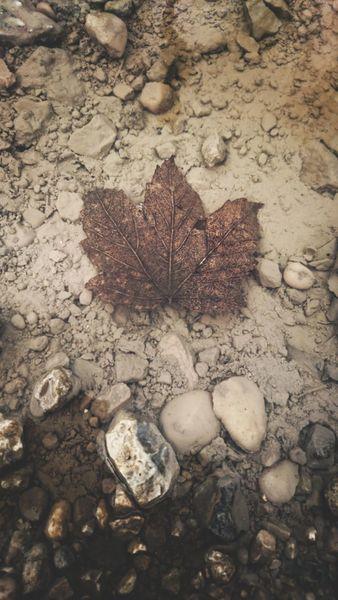 Natur, Wasser, Blätter, Fotografie