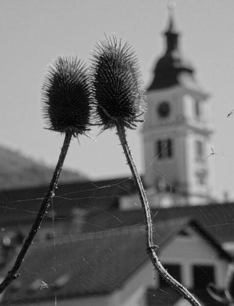 Natur, Pflanzen, Kirche, Fotografie
