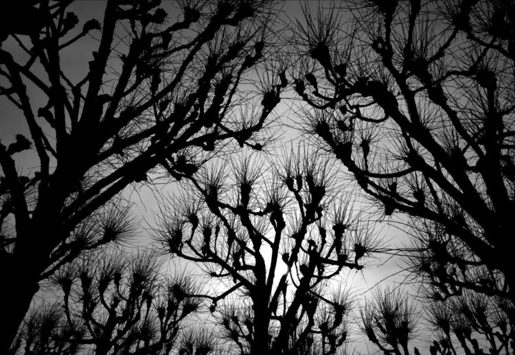 Natur, Baum, Pflanzen, Fotografie