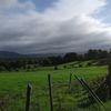 Feld, Landschaft, Natur, Wiese