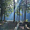 Baum, Wasser, Natur, Fotografie