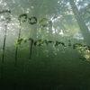Natur, Baum, Fotografie,