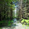 Wasser, Wald, Natur, Fotografie