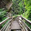Wasserfall, Wald, Natur, Fotografie