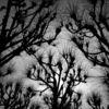 Baum, Pflanzen, Natur, Fotografie