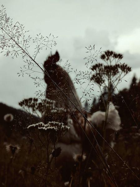 Tiere, Landschaft, Hahn, Fotografie