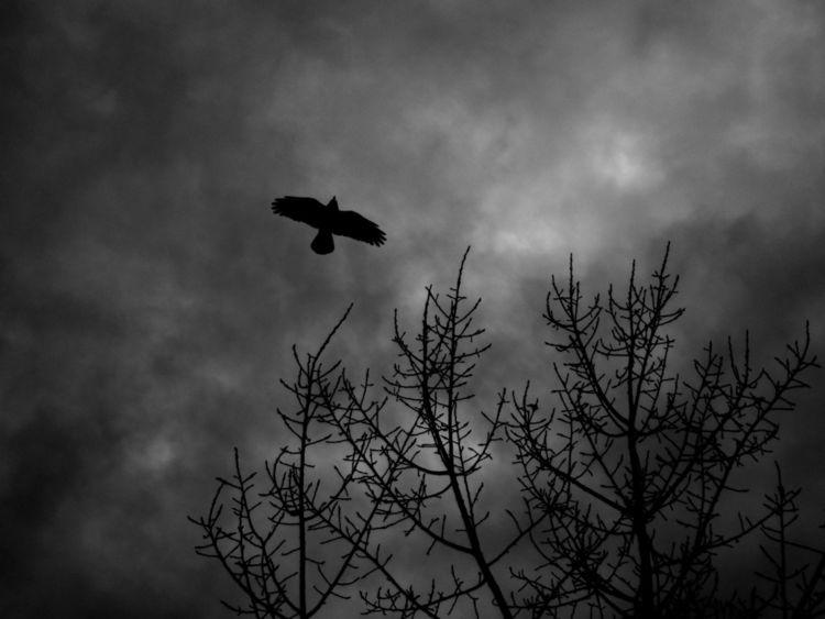 Vogel, Freiheit, Natur, Fotografie