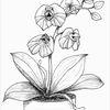 Orchidee, Kragenechse, Echse, Agame