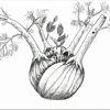 Baum, Knollenfenchel, Lichtung, Fenchel