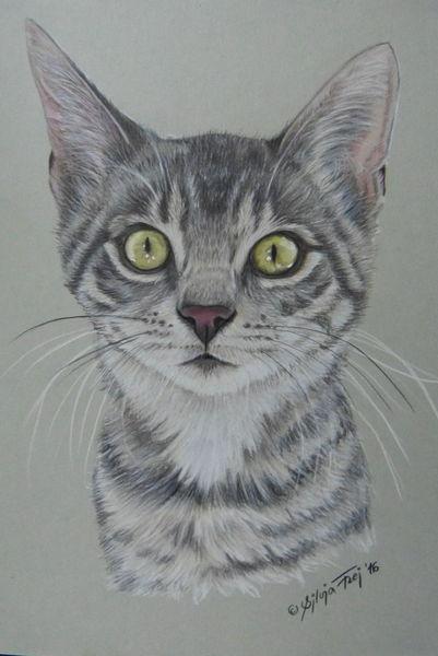 Buntstiftzeichnung, Katze, Tiere, Raubtier, Haustier, Zeichnungen