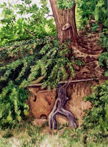 Baum, Natur, Aquarell, Insel, Rügen,