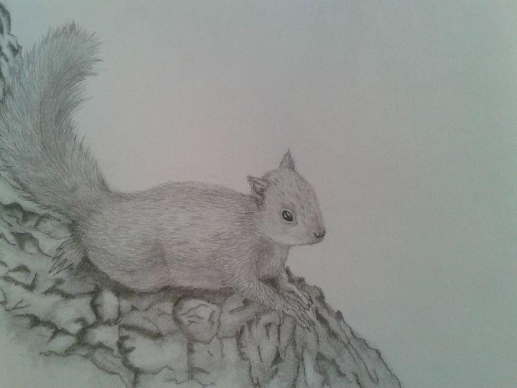 Bleistiftzeichnung, Tiere, Skizze, Eichhörnchen, Zeichnungen