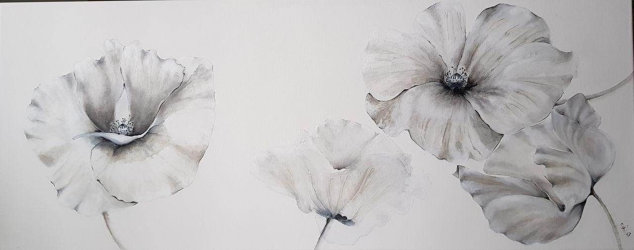 Bild: Mohnblumen, Schwarz, Weiß, Blumen von kirrsim bei KunstNet