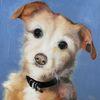 Rüde, Hund, Tiere, Malerei