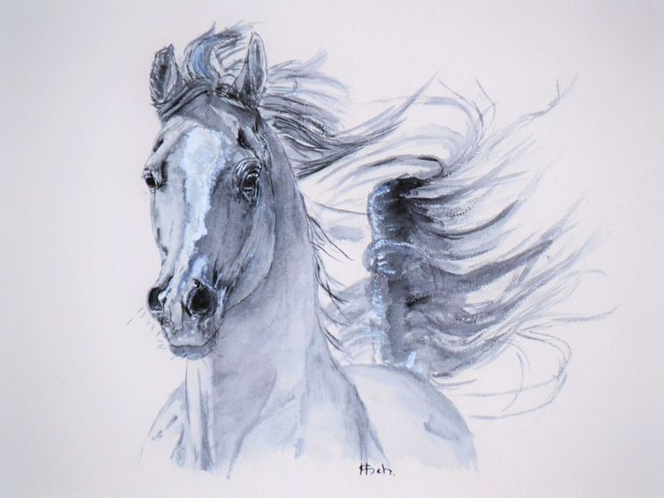 temperament araber pferde pferdekopf galopp von. Black Bedroom Furniture Sets. Home Design Ideas