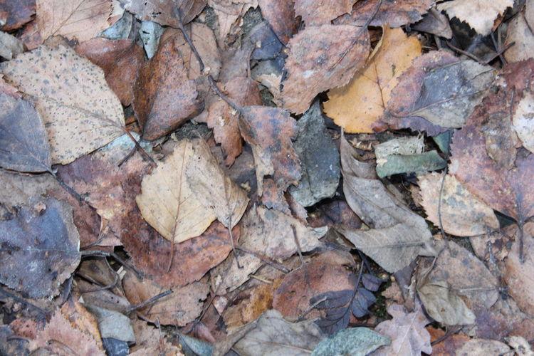 Schatten, Vergehen, Kalt, Herbst, Dunkel, Blätter