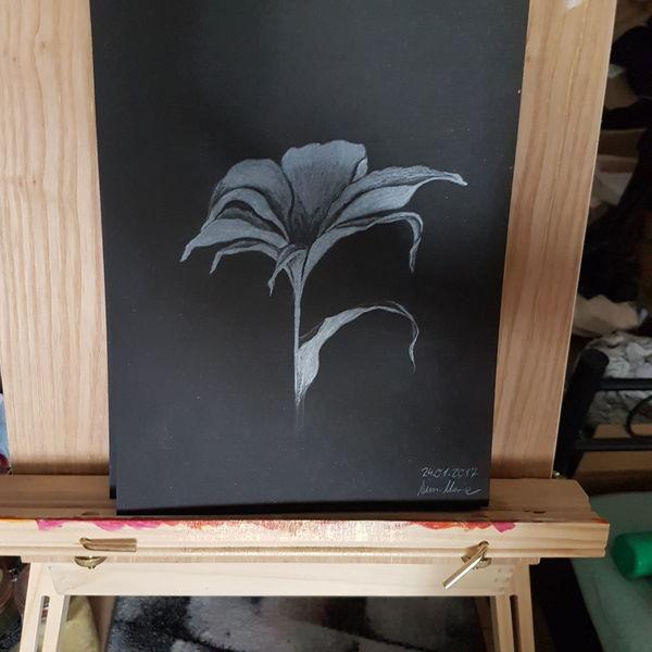 Lilie, Schwarzweiß, Zeichnung, Pappe, Edel, Karton