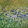Wandbilder, Monet, Blumengarten, Kunstwerk