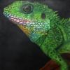 Airbrush, Echse, Tierportrait, Malerei
