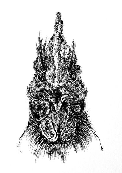 Tuschezeichnung, Hahn, Tiere, Natur, Vogel, Zeichnungen