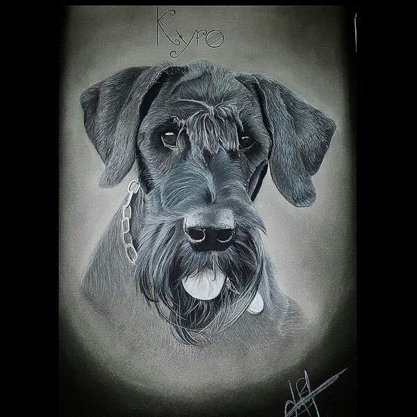 Fell, Zeichnung, Realismus, Tierportrait, Schwarz, Hund