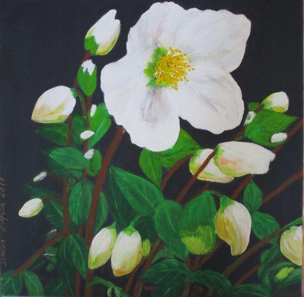 Natur, Christrose, Weiß, Blumen, Grün, Pflanzen