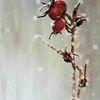 Winter, Pflanzen, Hagebutte, Schnee
