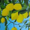 Zitrusfrüchte, Natur, Gelb, Zitrone