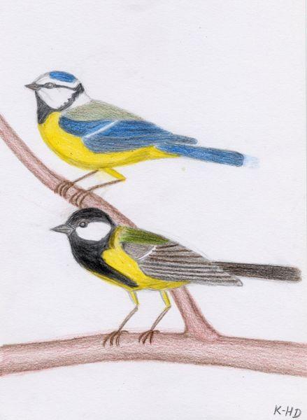 Natur, Zeichnung, Vogel, Zeichnungen, Blaumeise