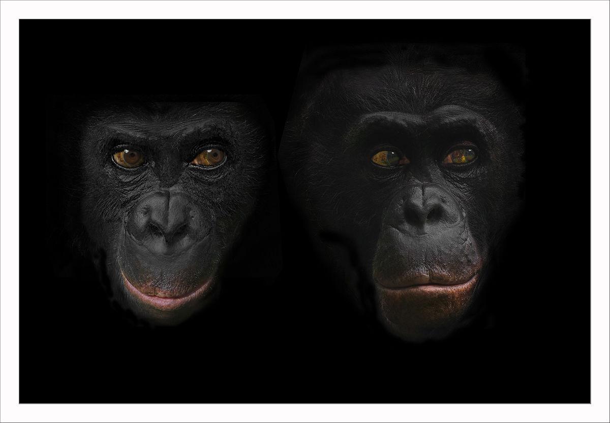 Sprechende Augen: Zoo, Primaten, Affe, Menschenaffen von