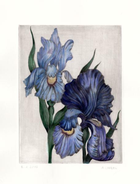 Pflanzen, Schwertlilie, Natur, Blumen, Iris, Druckgrafik