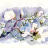 Blüte, Magnolien, Sturm, Äste