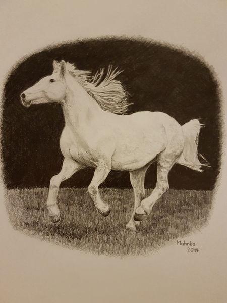 Tiere, Schimmel, Natur, Pferde, Zeichnungen