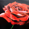 Pflanzen, Rose, Tropfen, Rot