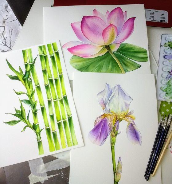 Bambus, Botanik, Schminke, Sammlung botanische illustration, Iris, Blumen