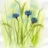 Sommerblumen, Blau, Aquarellmalerei, Kornblumen