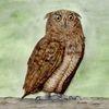 Eule, Aquarellmalerei, Tiere, Spirituell