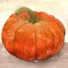Herbst, Orange, Natur, Kürbisse