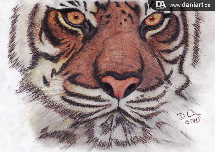Holzstift, Benaglischer tiger, Katze, Zeichnung, Tiger, Danielartelier