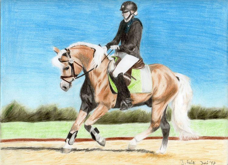 Pferde, Haflinger, Dressur, Buntstiftzeichnung, Zeichnungen