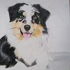 Australian shepherd, Hund, Buntstiftzeichnung, Zeichnungen