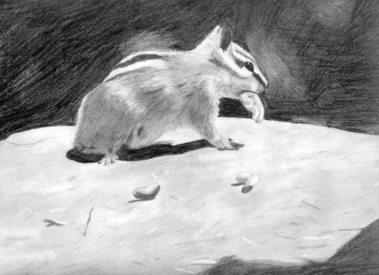 Zeichnung, Bleistiftzeichnung, Streifenhörnchen, Zeichnungen, Andere tiere